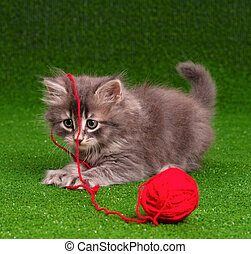 Kitten with red clew