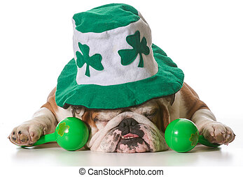 St Patricks Day dog - English bulldog wearing St Patrick's...