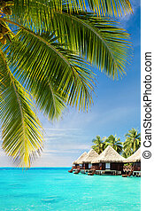 Coconut palm tree leaves over ocean with bungalows - Coconut...