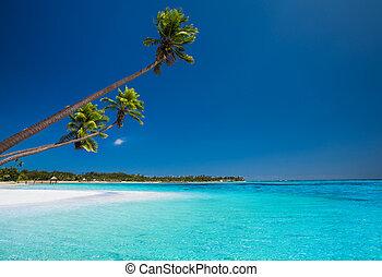 Few palms on deserted beach of tropical island - Few coconut...