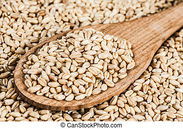 Wheat Berries close-up