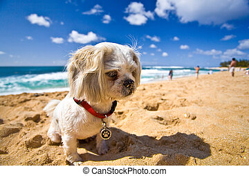 Beach Dog - A small dog is resting on the beach on a sunny...