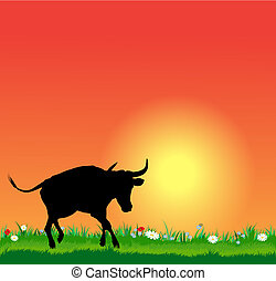 Vector bull silhouette on sunset