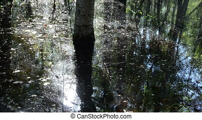 swamp forest man - through a swamp forest wade man with a...