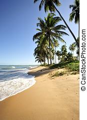 Paradise beach in Praia do Forte, Salvador de Bahia, Brazil