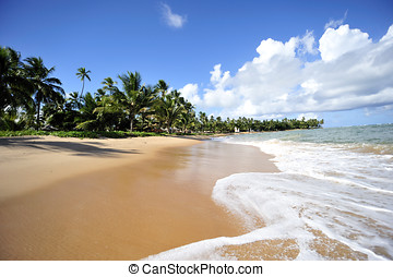 Paradise beach in Praia do Forte, Salvador de Bahia, Brazil