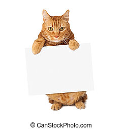 Tabby Cat Holding Blank Sign - A cute orange striped tabby...