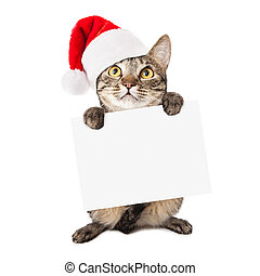 Cat Wearing Santa Hat Carrying Blank Sign - A cute brown and...