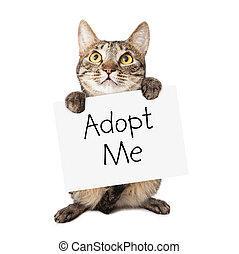 Cat Carrying Adopt Me Sign - A cute brown and black striped...
