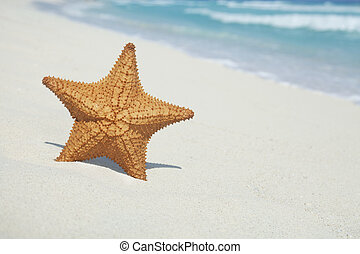 Starfish on beach with blue ocean and waves - Close up of...