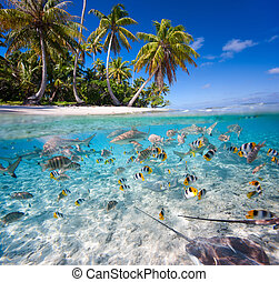 Tropical island - Beautiful tropical island under and above...