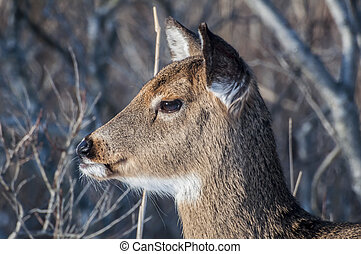 Deer Profile 6342 - A close up side profile of a white...