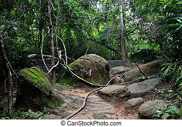 Cambodian jungle - The trail to the river of 1000 lingas...