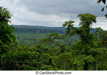 Cambodian jungle - Southwestern slope of Kulen mountain...