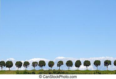 Trees valley in Peterhof without people.. St.Petersburg,...