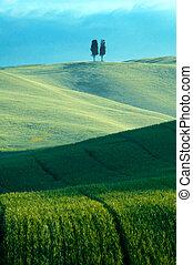 Green fields of wheat - Green luxuriant sloping fields of...