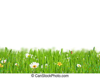 Abstract floral background on white background - Abstract...