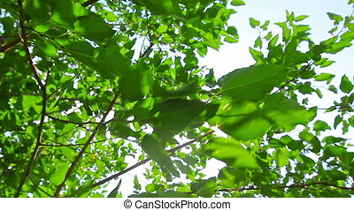 sunlight through the leaves