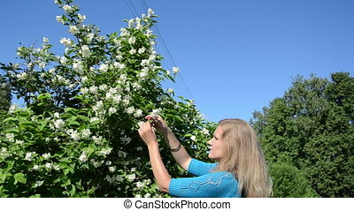 girl pick jasmin blooms - Beautiful blond girl woman in blue...