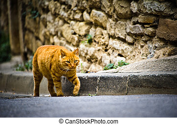 Cat in Provence - Cat on street in a small village in...