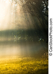 Foggy morning in a forest with sun rays and grass