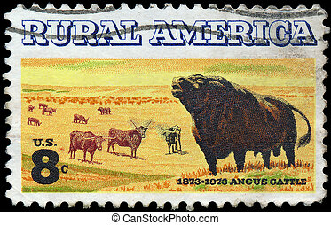 UNITED STATES OF AMERICA - CIRCA 1973: a stamp printed in the USA shows Angus and Longhorn Cattle, Centenary of Introduction of Angus Cattle to US, circa 1973