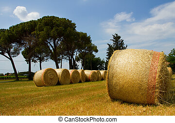 hayfield in Tuscany