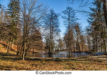 Frozen pond in austria with trees in the forrest