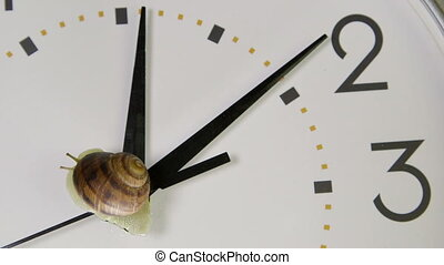 Garden snail on clock face