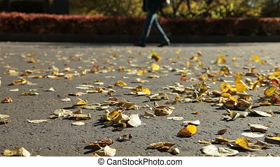 Fallen yellow leaves on the pavement