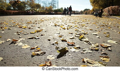 Fallen yellow leaves on park alley