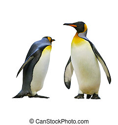 Emperor penguins isolated on white background