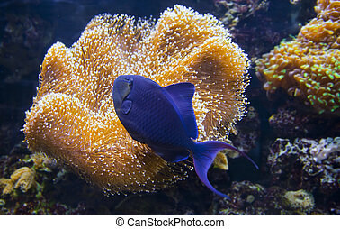 Colorful tropical fish under water - Different small...