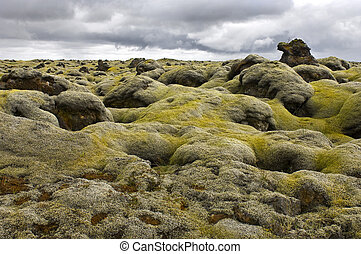 Moss covered lava field - The pillow-like tops of the moss...