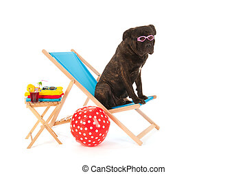 Dog at the beach - Dog with sunglasses on chair at the beach...