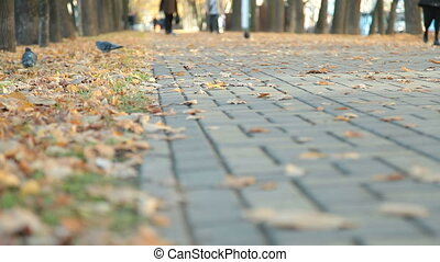 Cobblestone alley in autumn