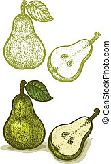 Pear - Illustrations of pear in retro style