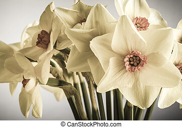 Spring Daffodils - Creamy Hues - A bunch of Spring Daffodils...
