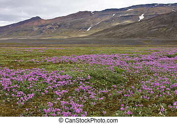 Oasis River bedding - Wild flowers blooming in the Icelandic...