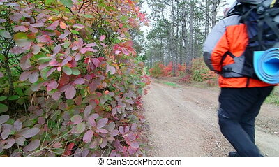 Man with backpack walks along forest trail