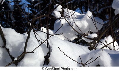 Dry twigs of a plant filled with snow