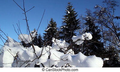 Twigs of a plant are covered with snow