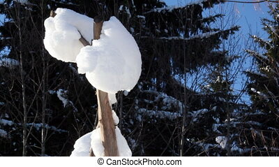 A tree branch covered with snow