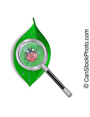 Magnifying glass with ladybird and green leaf