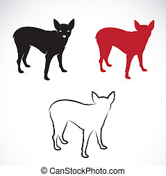 Vector image of a miniature pinscher on white background