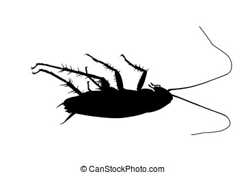 dead roach - raster illustration, dead roach isolated on...