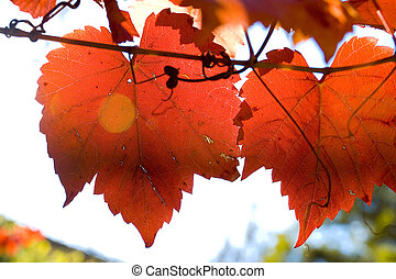 A stock Photograph of autumn leaves.