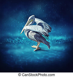 Pelican in the rain
