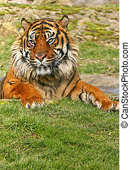 Endangered - These superb animals are currently endangered,...