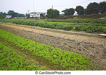 Cultivated land in a rural
